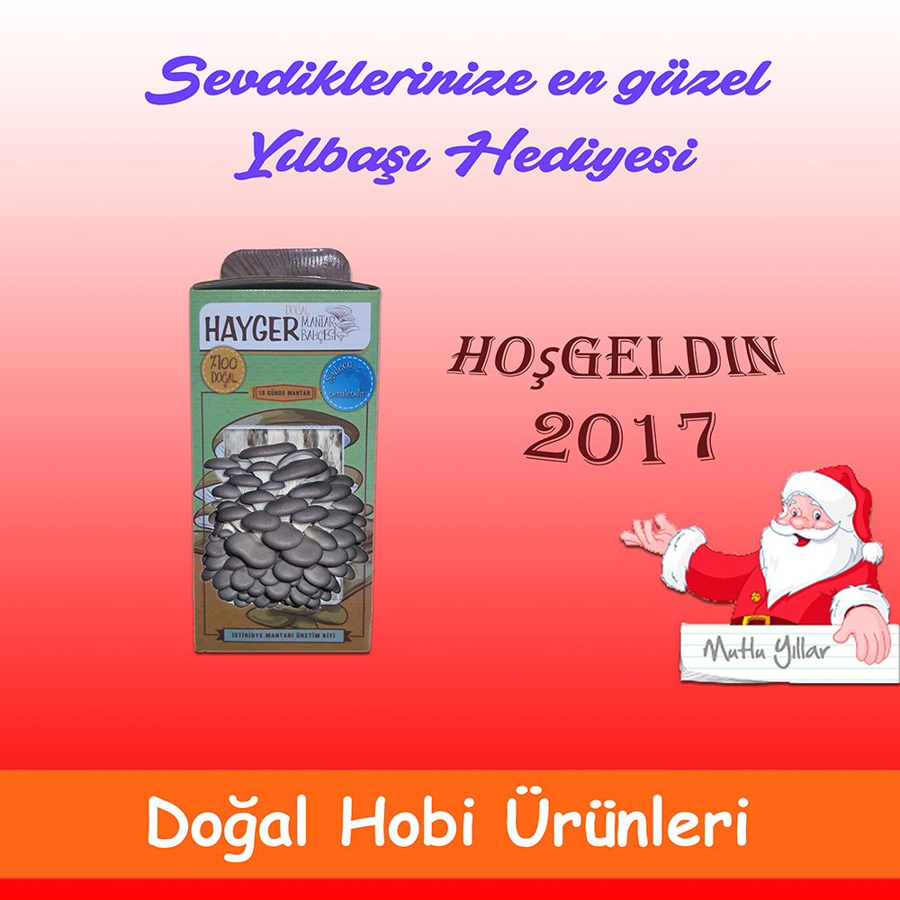istiridye-mantari-2017