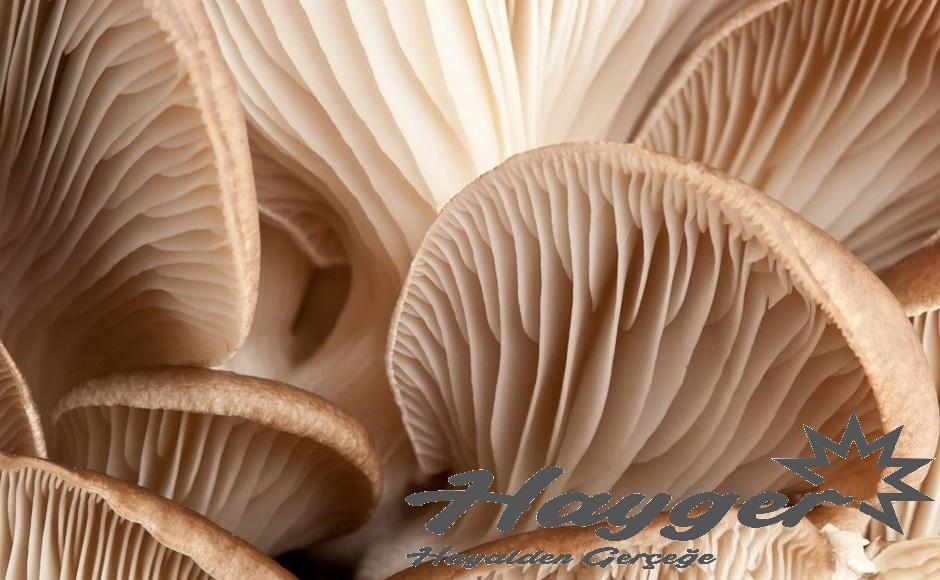 mantar üretiminde üretimhane seçimi nasıl yapılmalıdır.