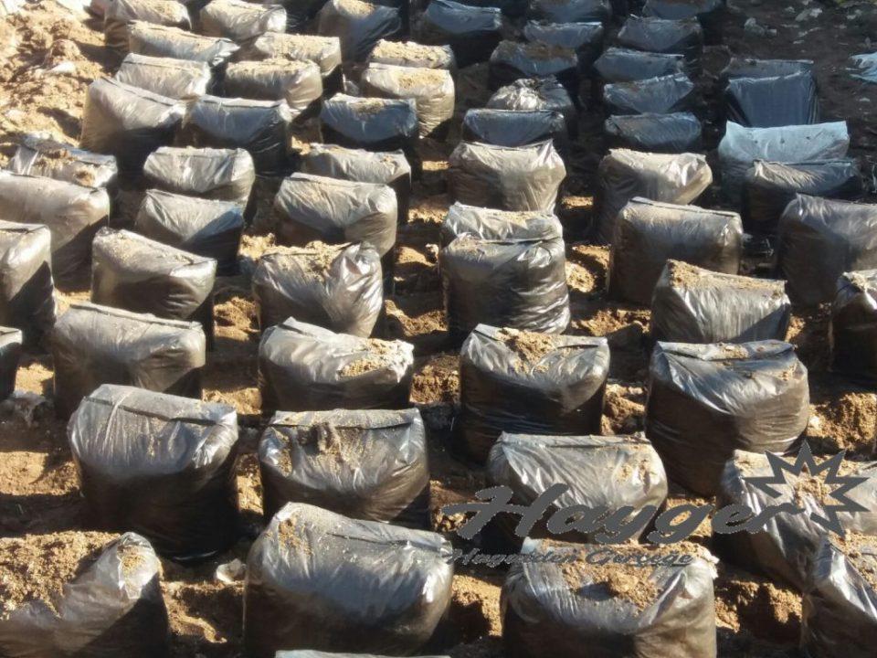 istiridye mantarı açık alan da kompostlar topraga yerleştirilerek üretim yapılır