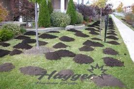 bahçe peyzaj düzenlemesi yapılmaktadır